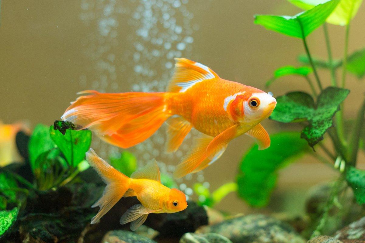 Рыбки которые не нуждаются в постоянном уходе